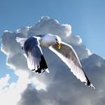 freiheit_und_fliegen