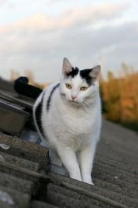 Katze4_3