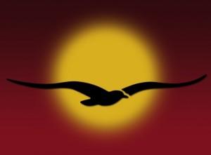 vogel_vor_sonne